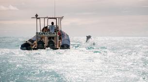 Experiences Wildlife-Lagon de Saint-Gilles-Observation des dauphins et cétacés à Saint-Gilles, La Réunion-1