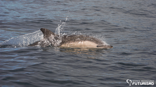 Wildlife Experiences-Ilha do Pico-Swimming with dolphins tour around Lajes do Pico in Pico Island-4