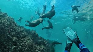 Snorkeling-Plettenberg Bay-Swimming with seals in Robberg Nature Reserve-2