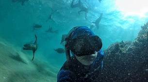 Snorkeling-Plettenberg Bay-Swimming with seals in Robberg Nature Reserve-1