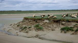 Randonnée / Trekking-Baie de Somme-Traversée guidée de la Baie de Somme-5