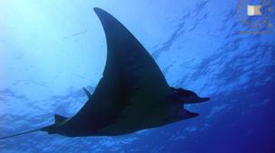Scuba Diving-São Miguel-Scuba Diving trip to Manta Blue in Sao Miguel-4