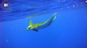 Scuba Diving-São Miguel-Scuba Diving trip to Manta Blue in Sao Miguel-1