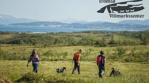 Hiking / Trekking-Tromsø-Husky Trekking near Tromso-4