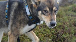 Hiking / Trekking-Tromsø-Husky Trekking near Tromso-5