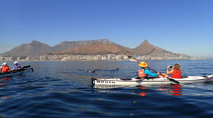 Sea Kayaking-Cape Town-Kayaking excursion in Table Bay, South Africa-1