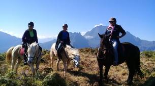 Balade à cheval-Maïdo, Saint-Paul-Balade à cheval découverte sur le Mont Maido, La Réunion-3