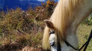 Balade à cheval-Maïdo, Saint-Paul-Balade à cheval découverte sur le Mont Maido, La Réunion-4