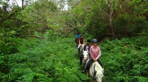 Balade à cheval-Maïdo, Saint-Paul-Balade à cheval découverte sur le Mont Maido, La Réunion-2