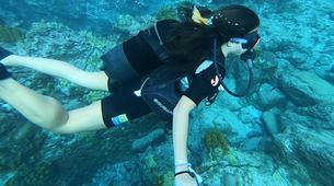 Plongée sous-marine-Réserve Cousteau-Baptême de Plongée dans la Réserve Cousteau en Guadeloupe-3