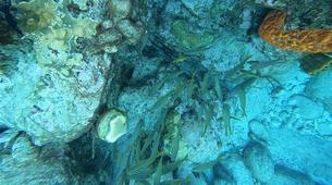 Plongée sous-marine-Réserve Cousteau-Baptême de Plongée dans la Réserve Cousteau en Guadeloupe-5
