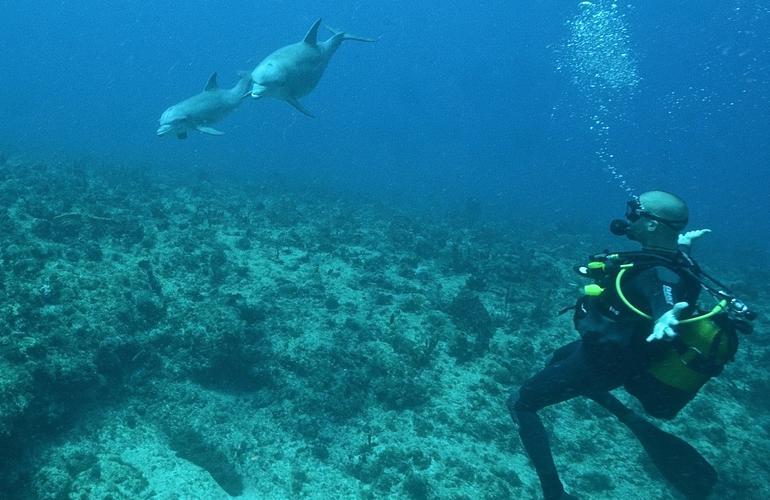 Plongée sous-marine à Port-Louis en Guadeloupe