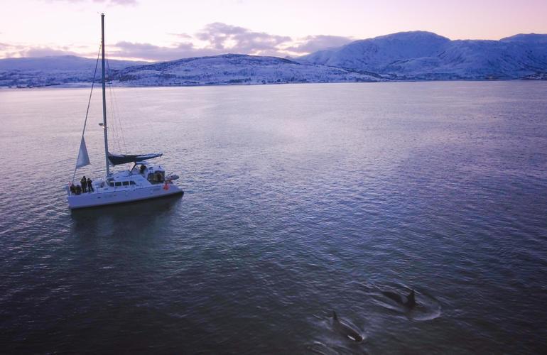 Voile - Tromsø