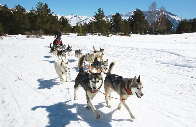 Dog Sled as a gift