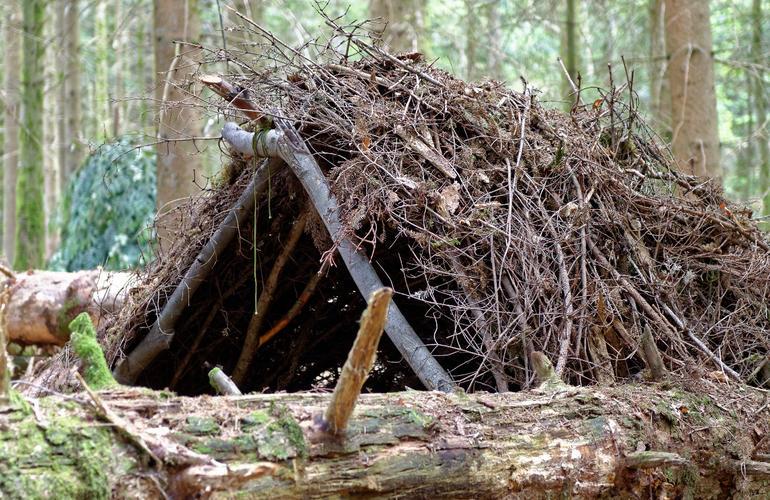 cabane bois stage de survie