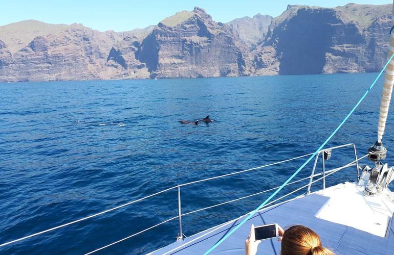 Whale watching excursions from Los Gigantes
