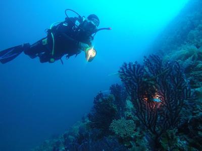 Scuba Diving: Adventure dives in Alonissos