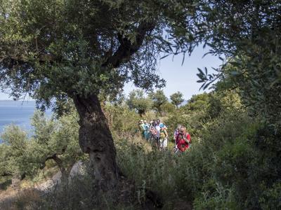 Hiking / Trekking: Hiking excursion above Kalamata