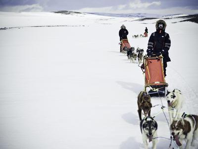 Self-drive Arctic dog sledding excursion in Tromsø