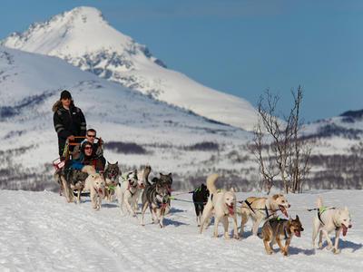 Arctic morning dog sledding excursion in Tromsø