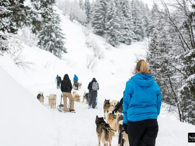 Dog Sledding Taster Lesson in Avoriaz, Portes du Soleil