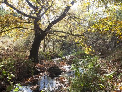 Hiking / Trekking: Hiking or Running for Beginners in Thessaloniki
