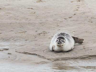 Guided hiking and seal discovery in the Baie de Somme