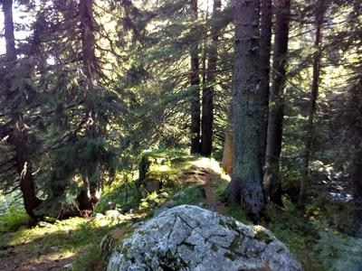 Hiking in the Vitosha Mountains from Sofia