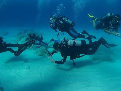 Scuba Diving: PADI Discover Scuba Diving course starting from Almyrida near Chania