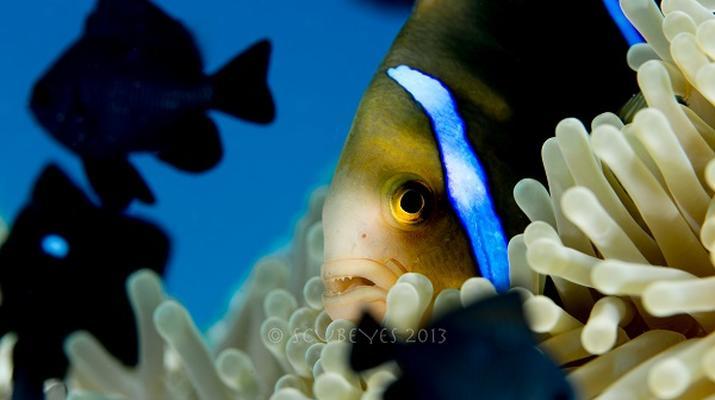 Plongée sous-marine-Bora Bora-Plongées Exploration à Bora Bora-5