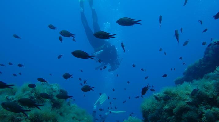 Plongée sous-marine-Balagne-Stage de plongée PADI à Ile Rousse, Corse-1