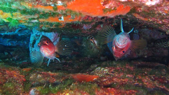 Plongée sous-marine-Balagne-Plongées Exploration à L'Île-Rousse-6