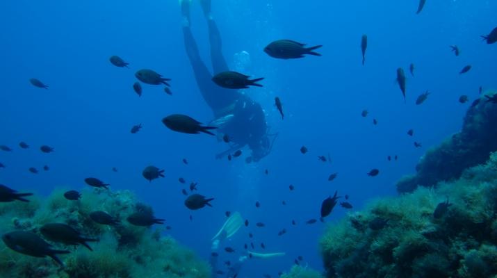 Plongée sous-marine-Balagne-Baptême de plongée à Ile Rousse, Corse-3
