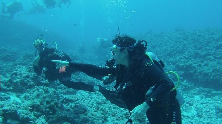 Plongée sous-marine-Bora Bora-Plongées Exploration à Bora Bora-1