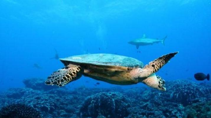 Plongée sous-marine-Bora Bora-Plongées Exploration à Bora Bora-4