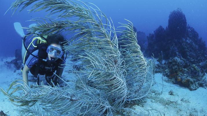 Plongée sous-marine-Les Trois-Îlets-Baptême Plongée aux Trois-Îlets, Martinique-2
