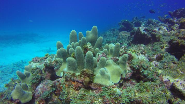 Plongée sous-marine-La Désirade-Plongées Exploration Guidées sur l'Île de la Désirade-3