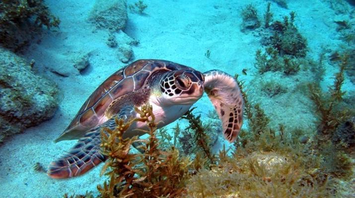 Plongée sous-marine-Les Trois-Îlets-Baptême Plongée aux Trois-Îlets, Martinique-5