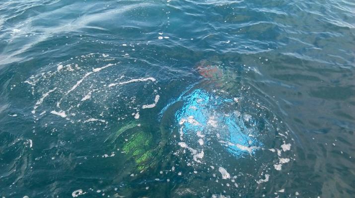 Scuba Diving-Madeira-Scuba diving PADI courses in Machico, Madeira-6
