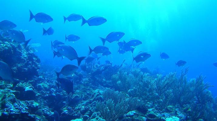 Plongée sous-marine-Saint-François-Stage de Plongée FFESSM Niveau 1 à Saint François-2