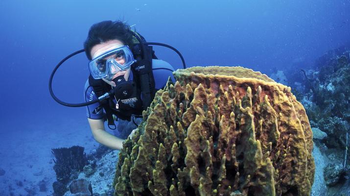 Plongée sous-marine-Les Trois-Îlets-Baptême Plongée aux Trois-Îlets, Martinique-1