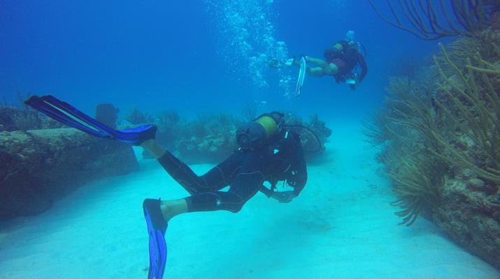 Plongée sous-marine-La Désirade-Plongées Exploration Guidées sur l'Île de la Désirade-6