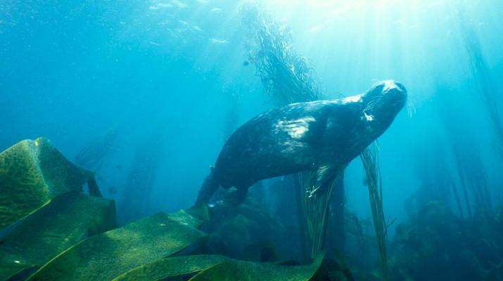 Plongée sous-marine-Brest-Initiation Plongée dans l'Aber Wrach, Bretagne-1