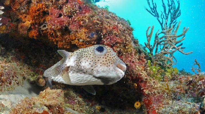 Plongée sous-marine-Port-Louis, Grande-Terre-Formation SSI Open Water Diver à Port-Louis, Guadeloupe-6