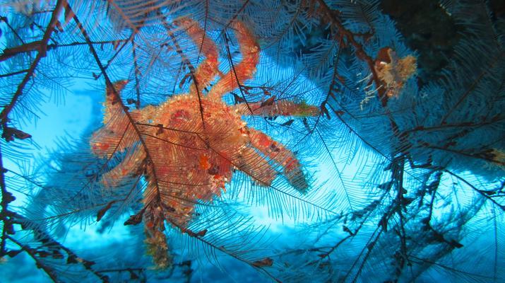Plongée sous-marine-Port-Louis, Grande-Terre-Plongées Exploration dans les Grottes de Port-Louis, Guadeloupe-8