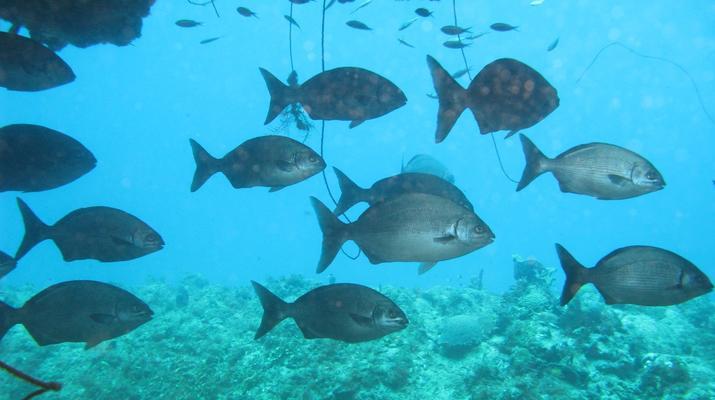 Plongée sous-marine-Port-Louis, Grande-Terre-Plongées Exploration dans les Grottes de Port-Louis, Guadeloupe-6
