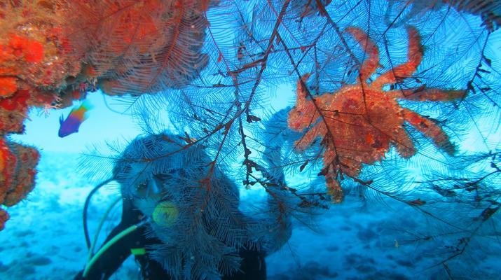 Plongée sous-marine-Port-Louis, Grande-Terre-Baptême de Plongée à Port-Louis, Guadeloupe-3