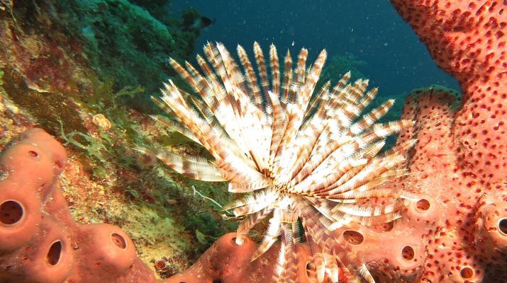 Plongée sous-marine-Port-Louis, Grande-Terre-Plongées Exploration dans les Grottes de Port-Louis, Guadeloupe-5