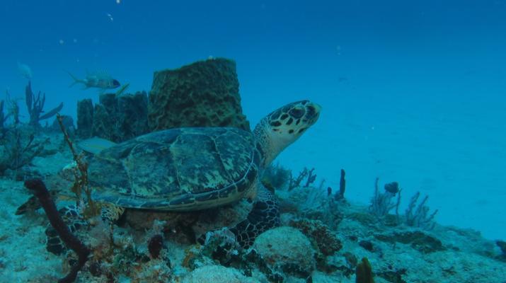 Plongée sous-marine-Port-Louis, Grande-Terre-Formation SSI Open Water Diver à Port-Louis, Guadeloupe-5