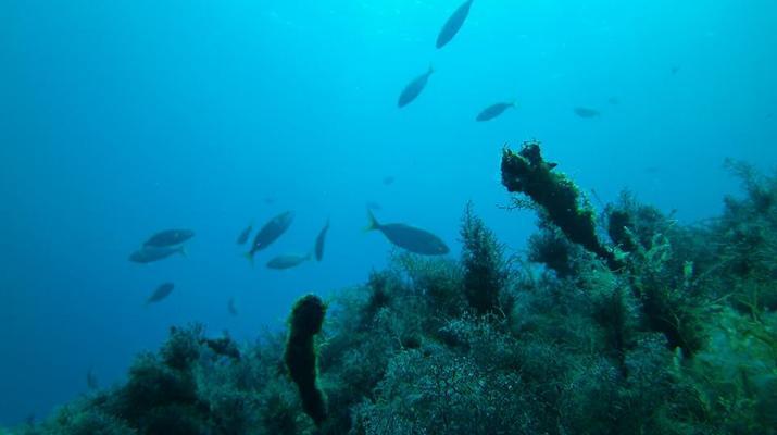 Snorkeling-Zakynthos (Zante)-Snorkeling excursion from Tsilivi in Zante-3
